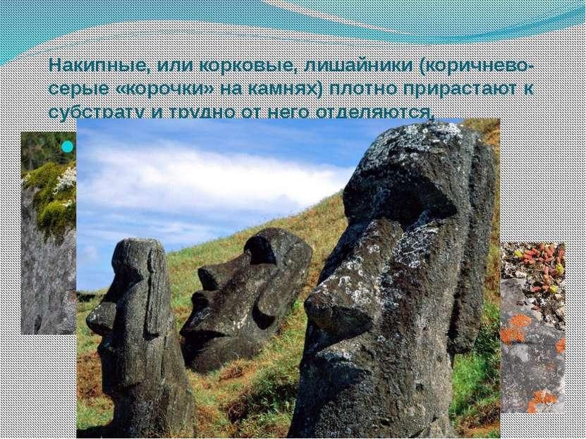 Накипные, или корковые, лишайники (коричнево-серые «корочки» на камнях) плотн...
