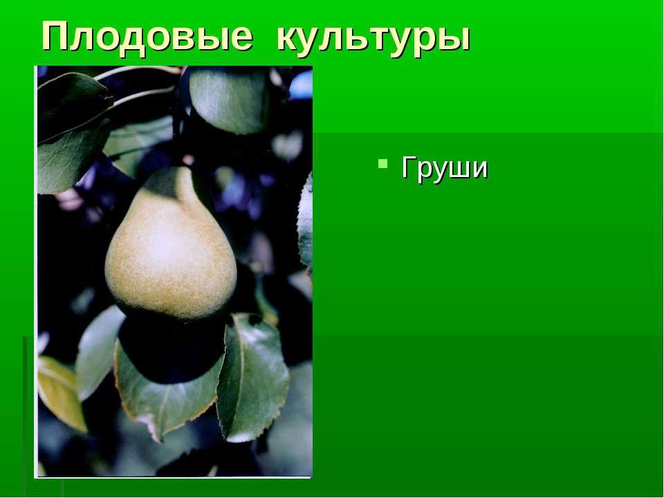 Плодовые культуры Груши