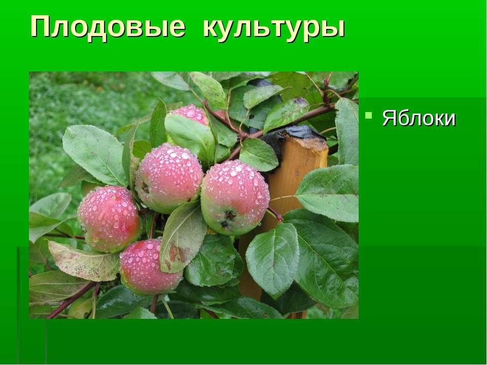 Плодовые культуры Яблоки