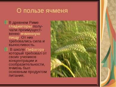 О пользе ячменя В древнем Риме гладиаторы полу-чали преимущест-венно ячменную...