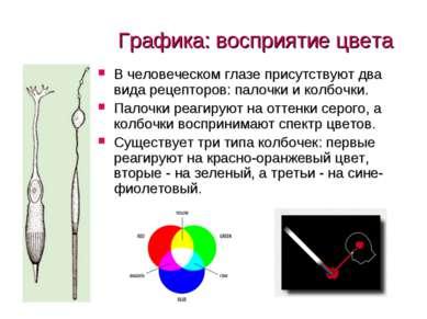 Графика: восприятие цвета В человеческом глазе присутствуют два вида рецептор...