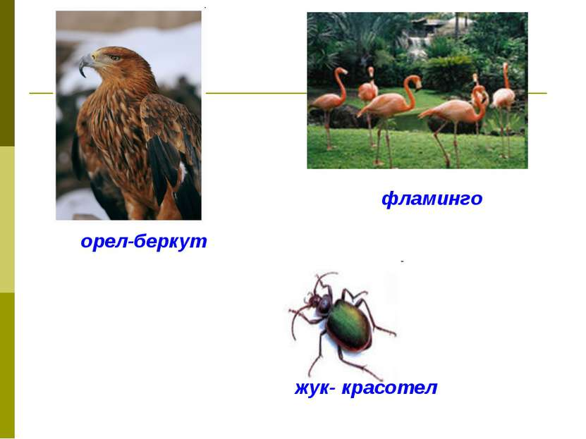 орел-беркут фламинго жук- красотел
