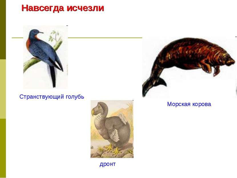 Навсегда исчезли Странствующий голубь дронт Морская корова