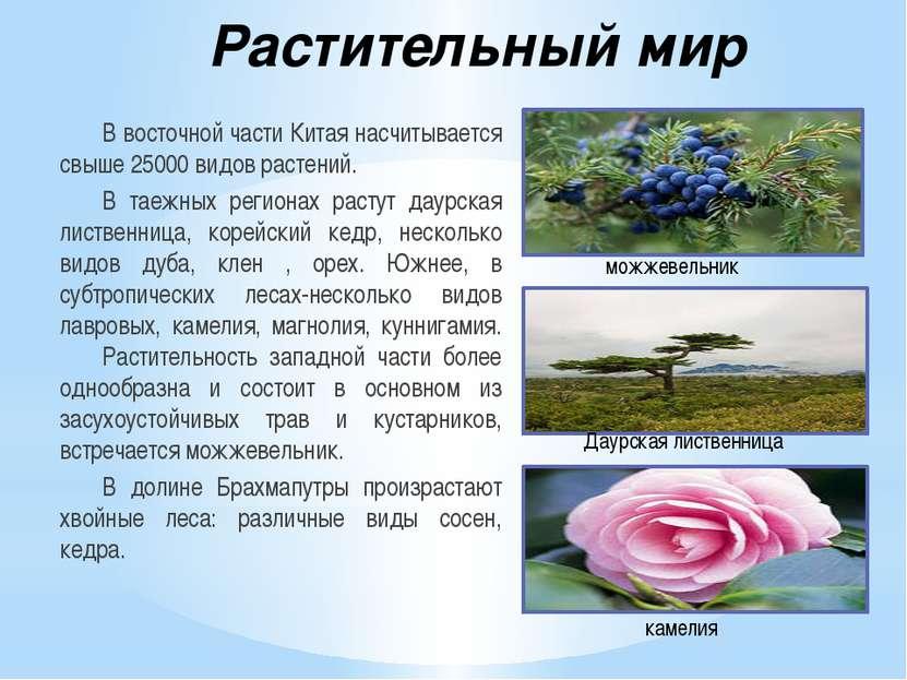 Растительный мир В восточной части Китая насчитывается свыше 25000 видов раст...