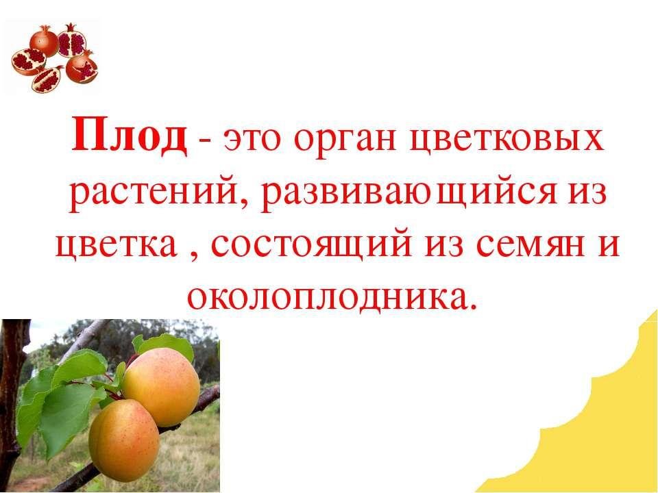 Плод - это орган цветковых растений, развивающийся из цветка , состоящий из с...