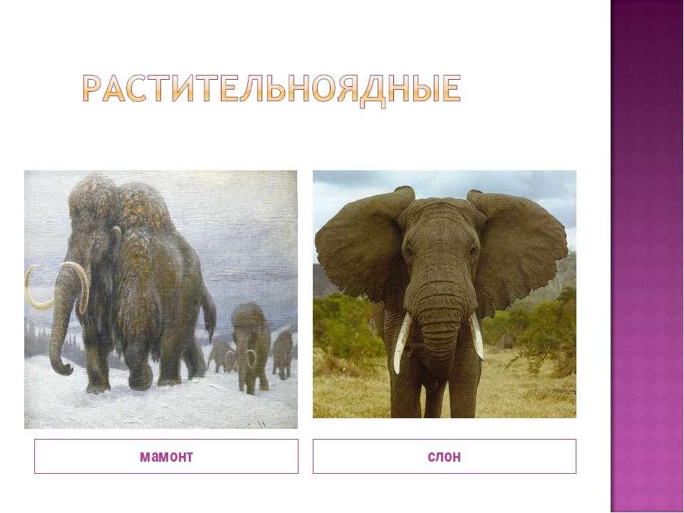 мамонт слон