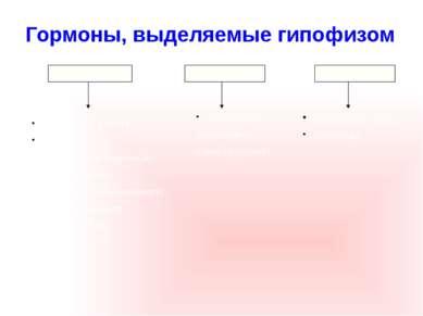 Передняя доля Гормон роста (СТГ); Регуляторные: АКТГ (адренокортикотропный), ...