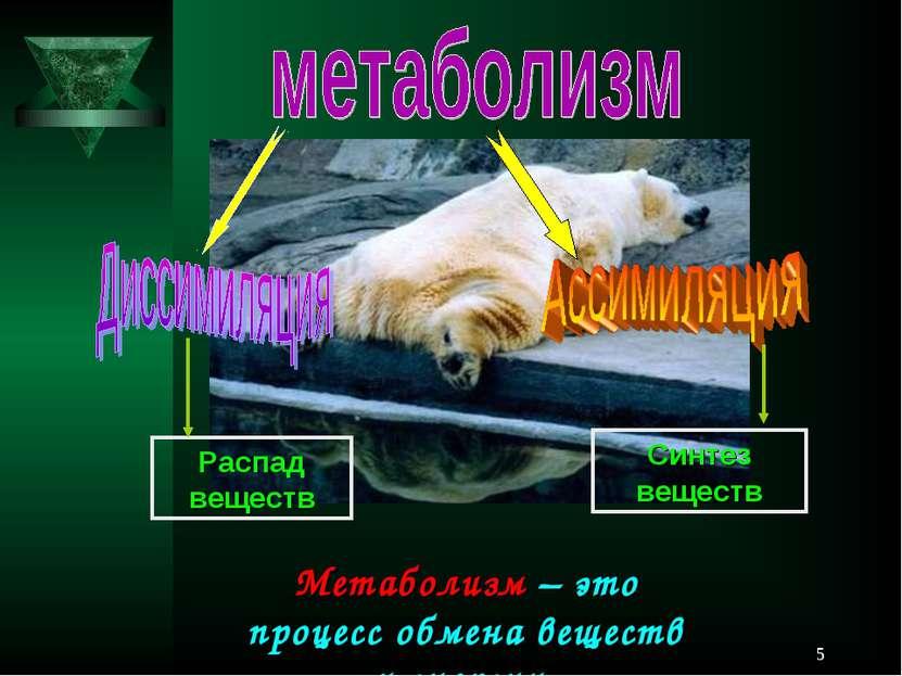 * Метаболизм – это процесс обмена веществ и энергии. Распад веществ Синтез ве...