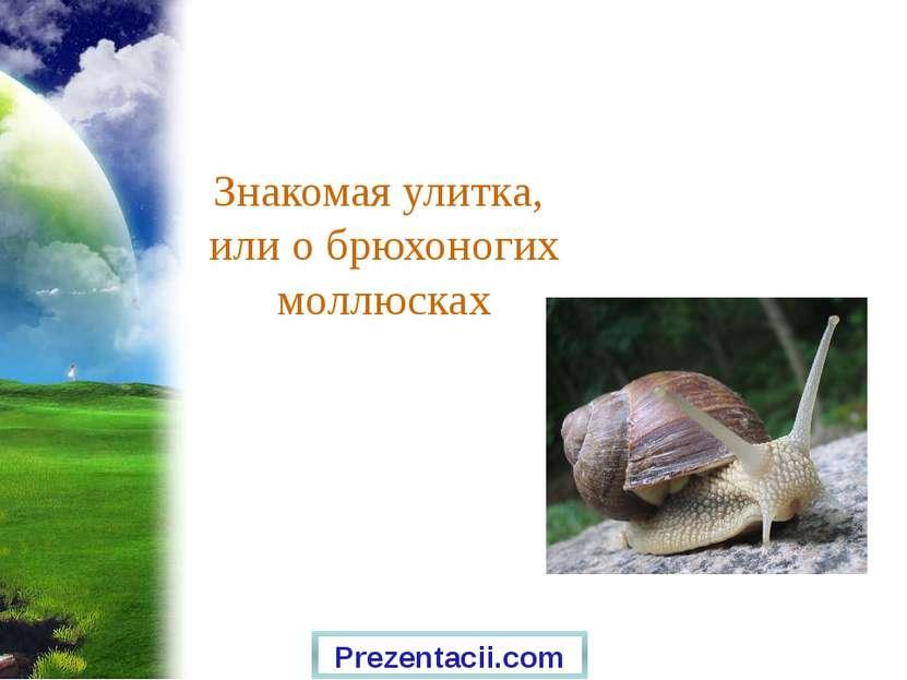 Знакомая улитка, или о брюхоногих моллюсках Prezentacii.com