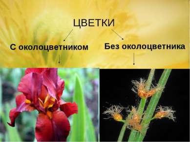 С околоцветником Без околоцветника ЦВЕТКИ