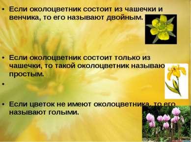 Если околоцветник состоит из чашечки и венчика, то его называют двойным. Если...