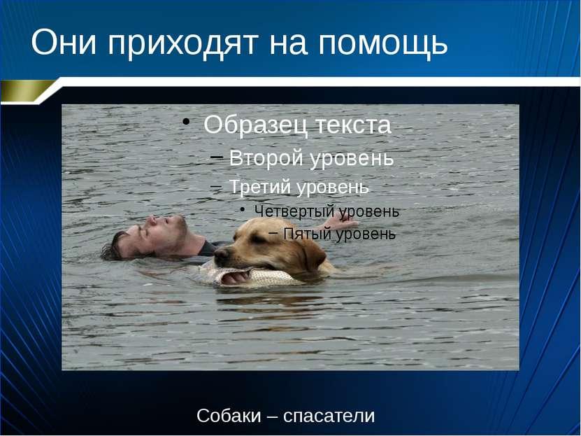 Они приходят на помощь Собаки – спасатели