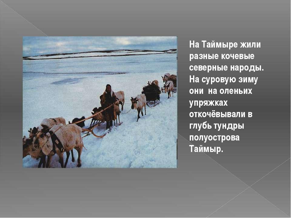 На Таймыре жили разные кочевые северные народы. На суровую зиму они на оленьи...