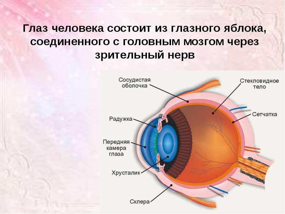 Глаз человека состоит из глазного яблока, соединенного с головным мозгом чере...