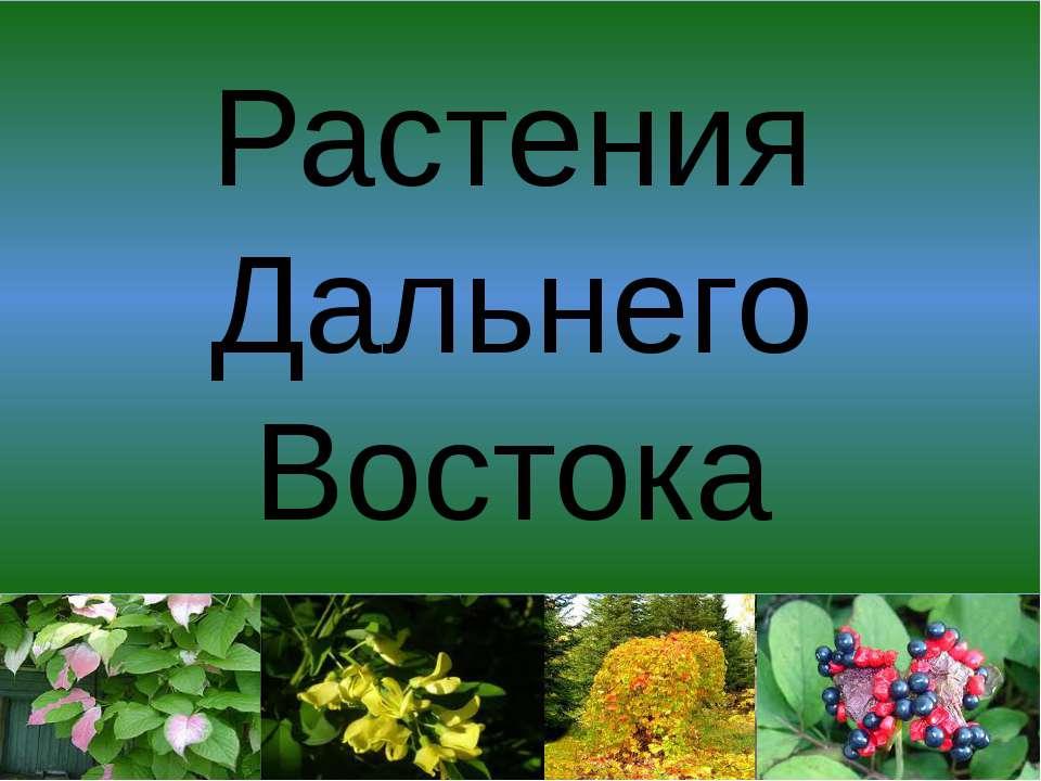 Растения Дальнего Востока