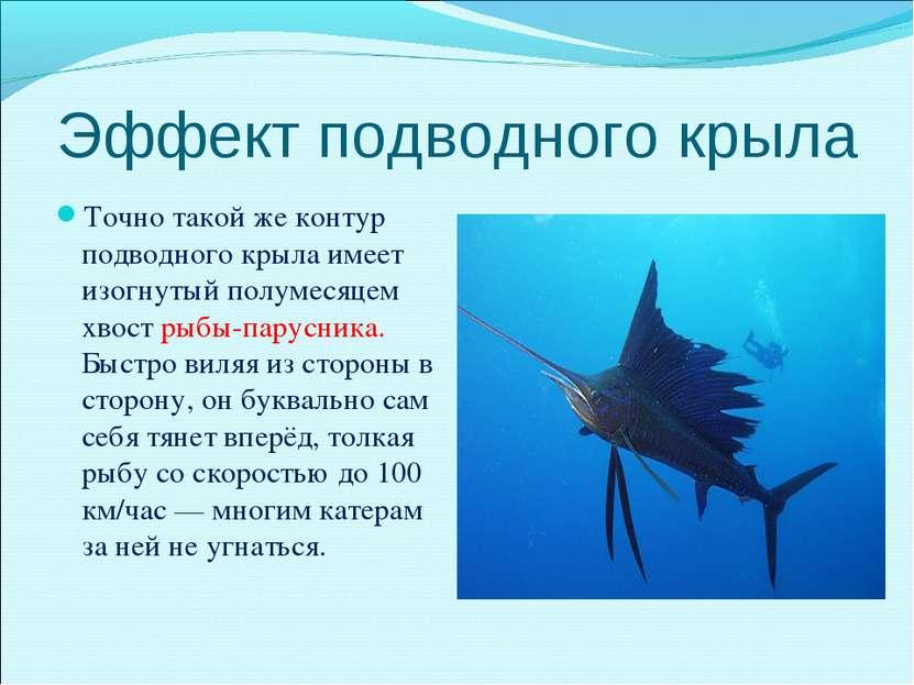 Эффект подводного крыла Точно такой же контур подводного крыла имеет изогнуты...