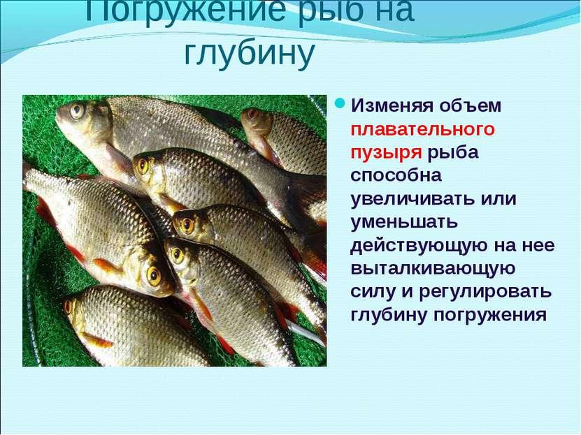 Погружение рыб на глубину Изменяя объем плавательного пузыря рыба способна ув...
