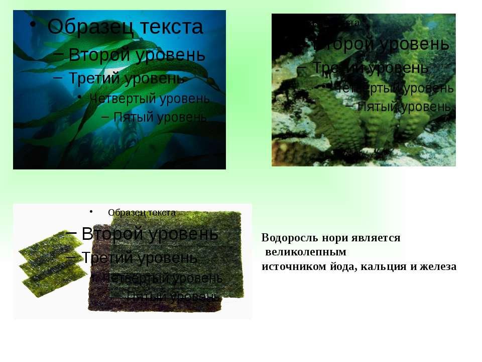 Водоросль нори является великолепным источником йода, кальция и железа