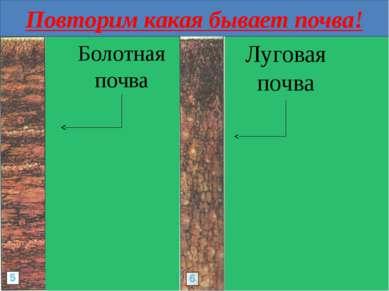Повторим какая бывает почва! Болотная почва Луговая почва