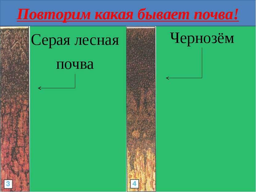 Повторим какая бывает почва! Серая лесная почва Чернозём