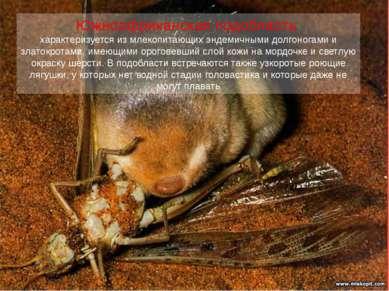 Южноафриканская подобласть характеризуется из млекопитающих эндемичными долго...