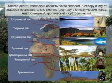 Экватор делит Эфиопскую область почти пополам. К северу и югу от экватора пос...
