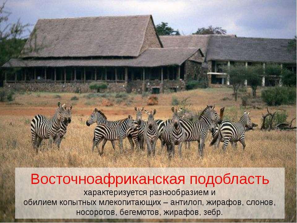 Восточноафриканская подобласть характеризуется разнообразием и обилием копытн...