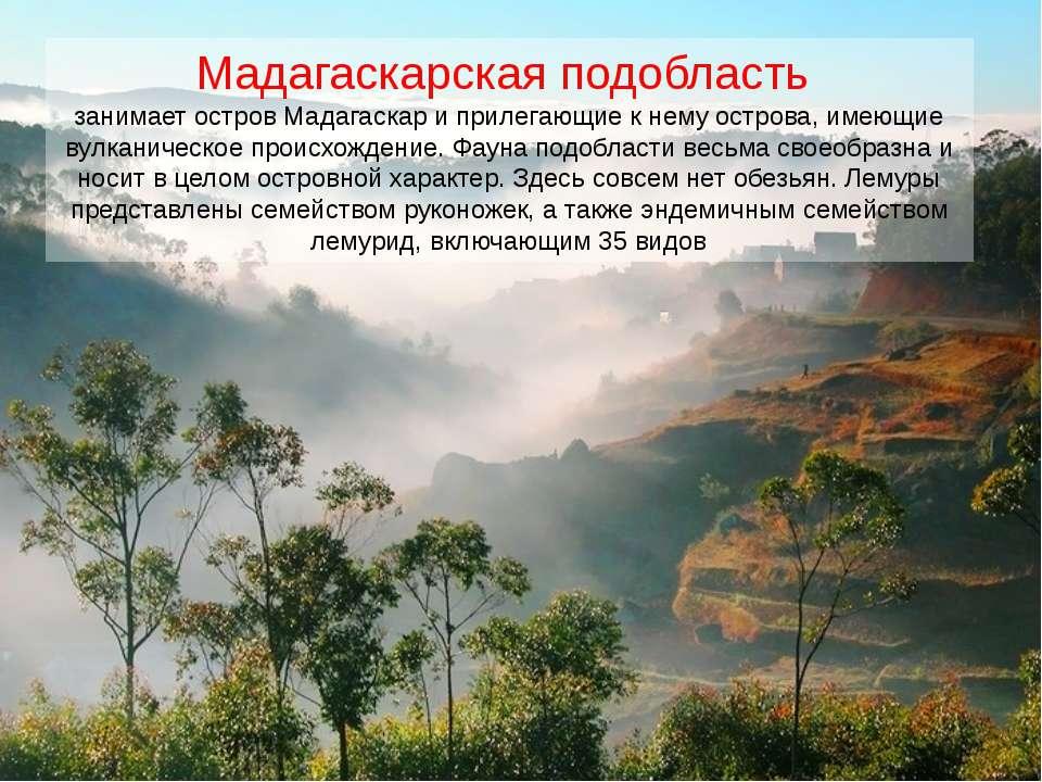 Мадагаскарская подобласть занимает остров Мадагаскар и прилегающие к нему ост...
