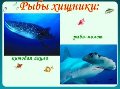 китовая акула рыба-молот