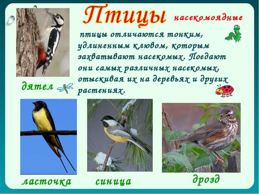 насекомоядные дрозд дятел ласточка синица птицы отличаются тонким, удлиненным...