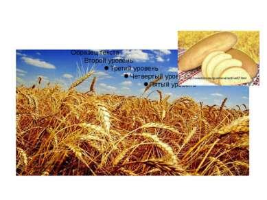 Яровая пшеница. http://desc.agro.ru/desc/desc_info.aspx?id=6550 http://www.ko...