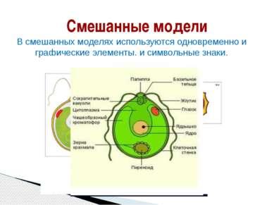 Смешанные модели В смешанных моделях используются одновременно и графические ...