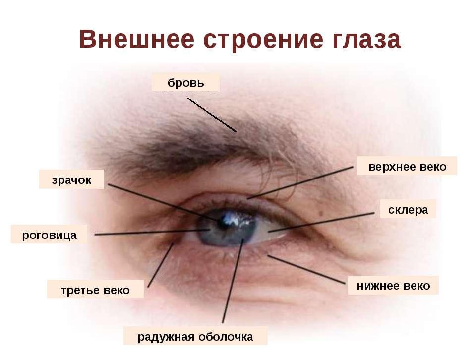 Радужная оболочка глаза карие зеленые голубые серые