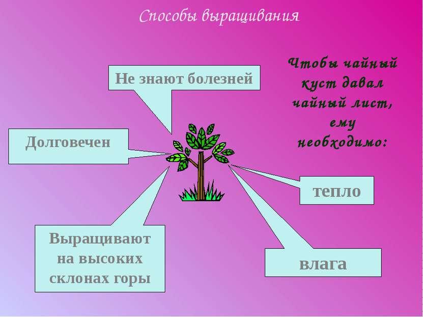 Способы выращивания тепло Чтобы чайный куст давал чайный лист, ему необходимо...