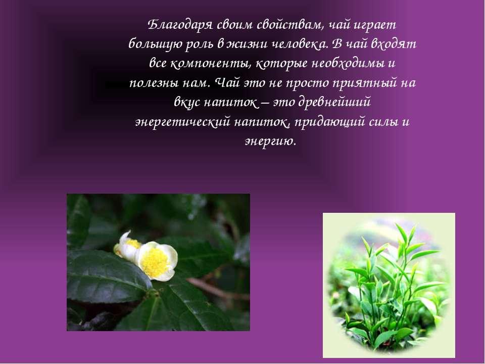 Благодаря своим свойствам, чай играет большую роль в жизни человека. В чай вх...