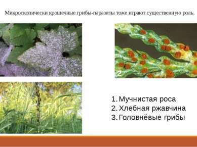 Микроскопически крошечные грибы-паразиты тоже играют существенную роль. 1 2 3...