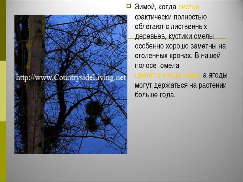 Зимой, когда листья фактически полностью облетают с лиственных деревьев, куст...