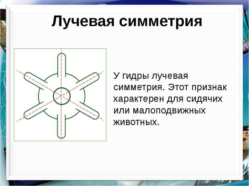 Лучевая симметрия У гидры лучевая симметрия. Этот признак характерен для сидя...