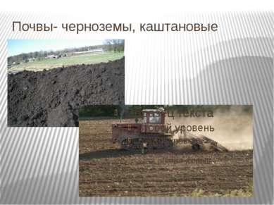 Почвы- черноземы, каштановые