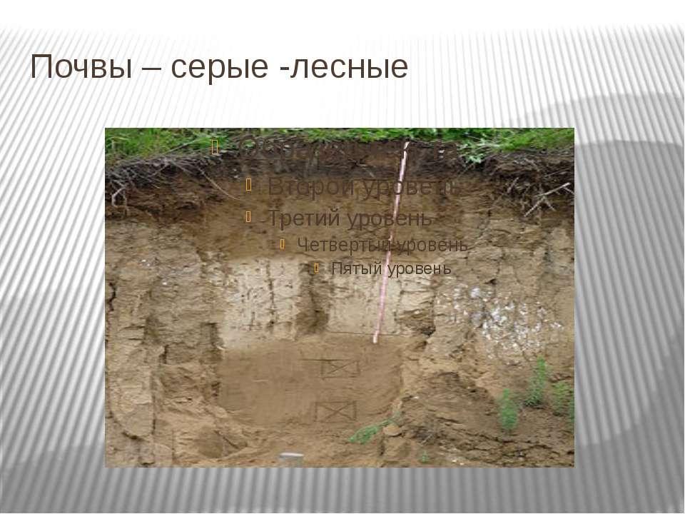 Почвы – серые -лесные