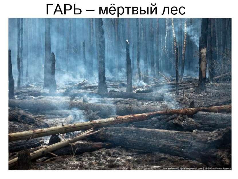 ГАРЬ – мёртвый лес