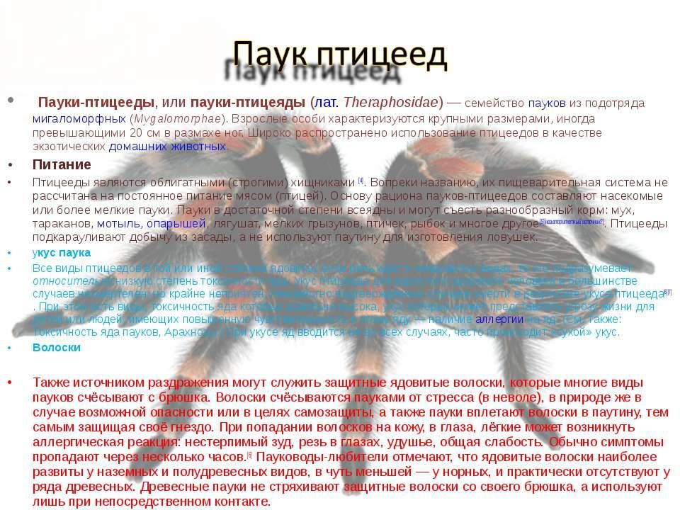 Пауки-птицееды, или пауки-птицеяды (лат.Theraphosidae)— семейство пауков из...