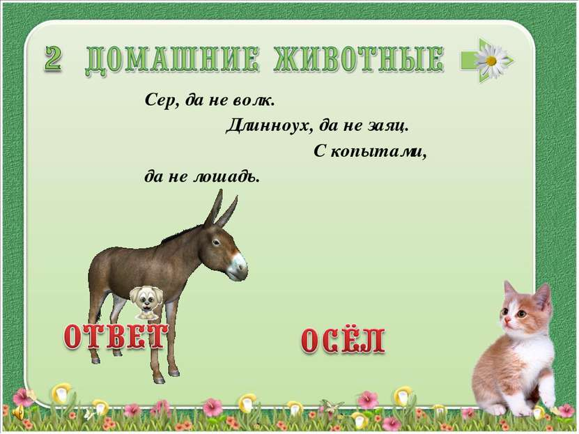 Сер, да не волк. Длинноух, да не заяц. С копытами, да не лошадь.