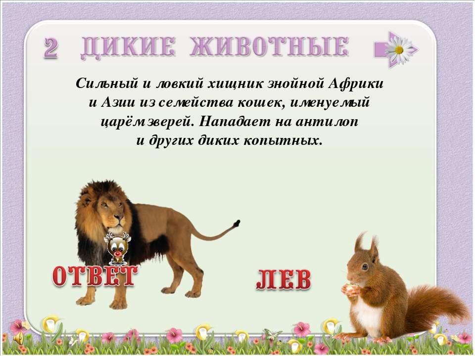 Сильный и ловкий хищник знойной Африки и Азии из семейства кошек, именуемый ц...