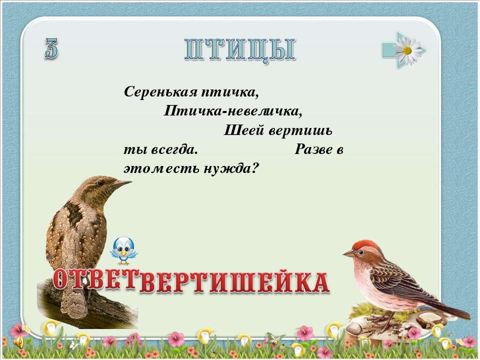 Серенькая птичка, Птичка-невеличка, Шеей вертишь ты всегда. Разве в этом есть...