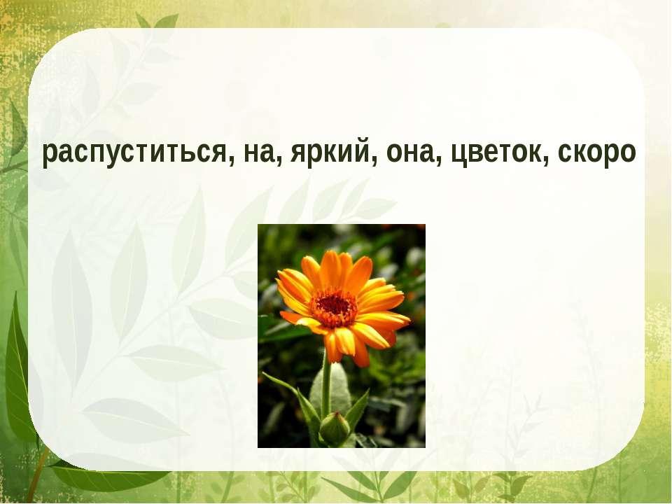 распуститься, на, яркий, она, цветок, скоро
