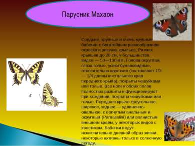 Парусник Махаон Средние, крупные и очень крупные бабочки с богатейшим разнооб...
