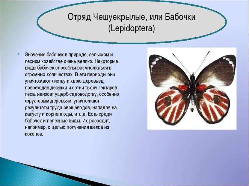 Значение бабочек в природе, сельском и лесном хозяйстве очень велико. Некотор...