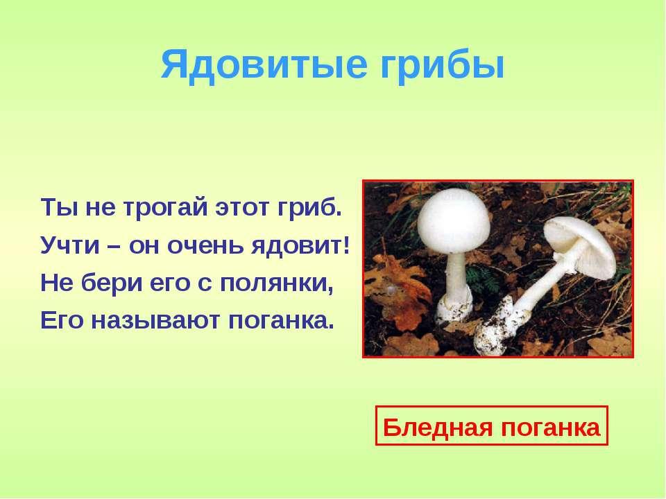 Ядовитые грибы Ты не трогай этот гриб. Учти – он очень ядовит! Не бери его с ...