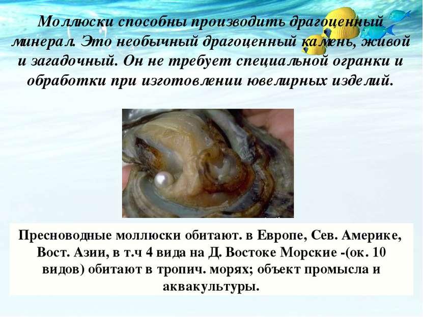Моллюски способны производить драгоценный минерал. Это необычный драгоценный ...